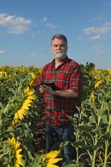 Farmer or agronomist examining sunflower plant in field using tablet