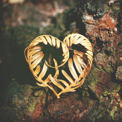 Heart-shaped dried Bracken fern frond on moss and lichen covered tree bark