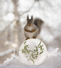 red squirrel on a round formed ice with leaves