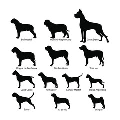 Vector set of dog silhouettes. Dog of the molosser group. Dogs standing in the counter. Black on white.