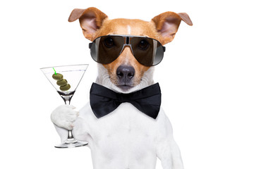 cocktail drinking  dog