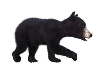 3D Rendering Black Bear Cub on White