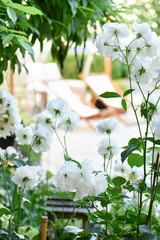 Napping time in a garden with white roses