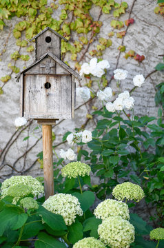 Old wooden birdhouse, white hydrangeas, old white roses and ivy in a French garden