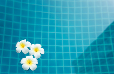 Plumeria flower in outdoor swimming pool,spa concept