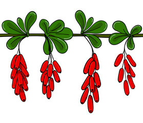 Seamless pattern barberry. Endless ornament twig of berberis. Background brunch with leaves and cluster of red berry.