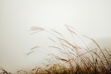 Green grass in the field with sunbeams and fog. Blurred summer background, selective focus.