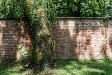 Mauer mit Baum am alten Südfriedhof München