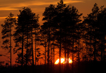 Trees silhouetted during sunset near the town of Berezino