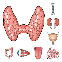 Human organs cartoon icons in set collection for design. Anatomy and internal organs vector symbol stock web illustration.