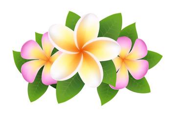 Plumeria, frangipani flower. design element