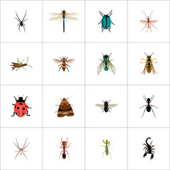 Set of insect realistic symbols with dragonfly, insect, wasp and other icons for your web mobile app logo design.