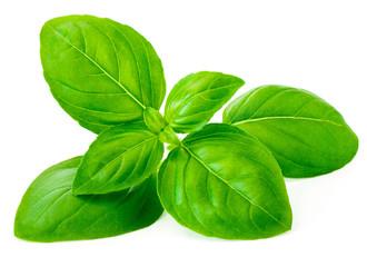 Papiers peints Graine, aromate Basil leaf isolated on white background, macro