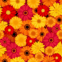 Vector seamless pattern with red, orange and yellow gerbera flowers.