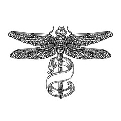 Dragonfly with ribbon wrapped around the tail. Sketch tattoo. Engraving style. Vector illustration.