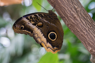 Butterfly Resting on Tree Bark