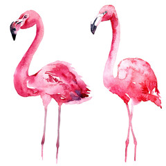 Watercolor pink flamingo set.