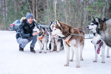 Young man playing with cute husky dogs in the winter forest by the sledges.