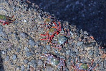 crabs on stone close-up
