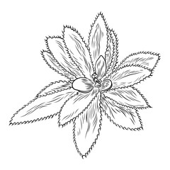 Drawing cactus Succulent bouquets elements for invitations, greeting cards, covers and other items. Vector.