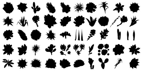Large black silhouettes cactus set. Hand drawn plants. Exotic floral sketch illustration collection. Different cactuses in monochrome style. Vector.
