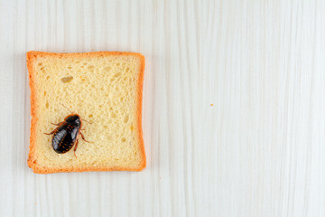 Cockroach on food in the kitchen.