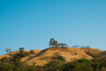 Poster Hill hill with trees and blue sky - scenic landscape