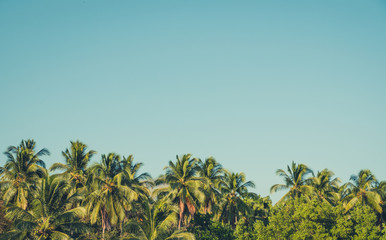 palm trees and blue sky background - retro style