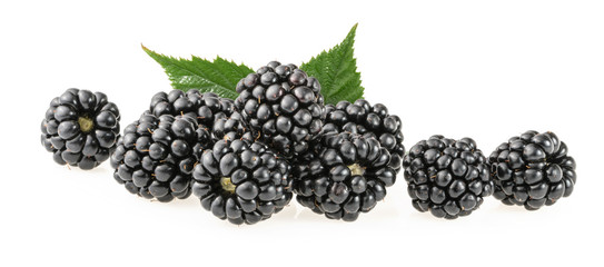 Blackberry fruit on white background