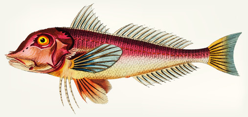 Illustration of fish isolated