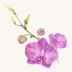 Illustration drawing of flowers pink petals