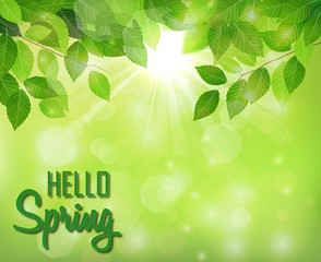 Hello spring background with fresh green leaves