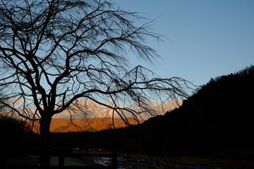 朝日が昇る 木 シルエット 風景