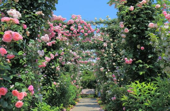 Rose garden flower arcade and bench