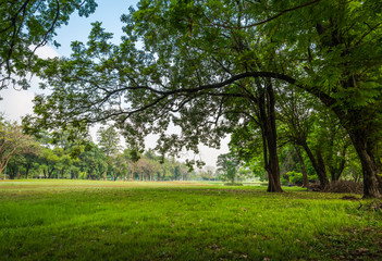 Big tree with green grass field in Public Park