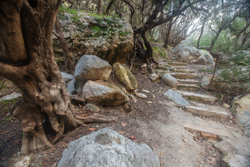 Old tree and stone stairs in the national park on cypros