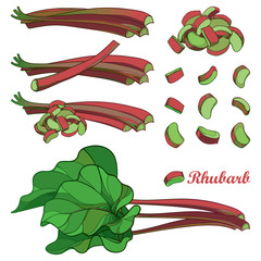 Vector set with outline Rhubarb or Rheum vegetable in red and green isolated on white background. Contour cut and whole stalk pieces, ornate leaf and Rhubarb bunch for organic food design.