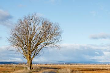Chopo, carretera, campo agrícola y cielo azul con nubes. El Páramo, León, España.