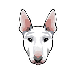 Image of an dog bull terrier on white background.