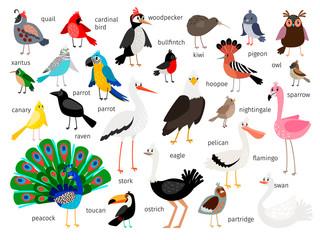 European and asian bird set