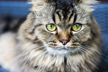 Portrait of a cat with eyes like a Cheshire cat.