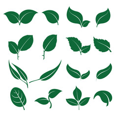 Leaves icon set isolated on white background. Various shapes of green leaves of trees and plants. Elements for eco and bio logos.