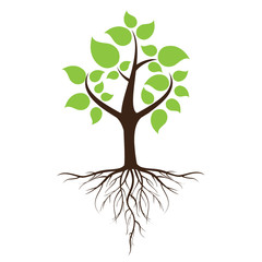 Green leafy tree with roots With trees isolated from white background.