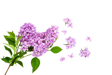 Poster Lilac lilac flower on old wooden background