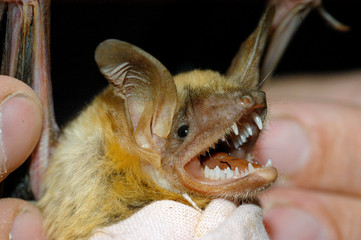 Close up of a bat