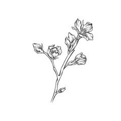 Flower branch monochrome sketch, floral design element vector Illustration