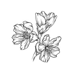 Flowering branch, monochrome floral design element hand drawn vector Illustration