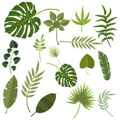 Tropical leaves green jungle.