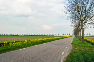 Long straight road through an agricultural landscape in the spring season