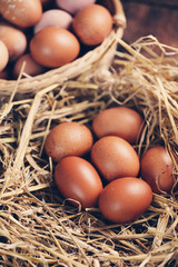 eggs in nest, tinted